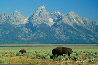 Grand Teton National Park -004