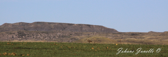 Curlew - May13